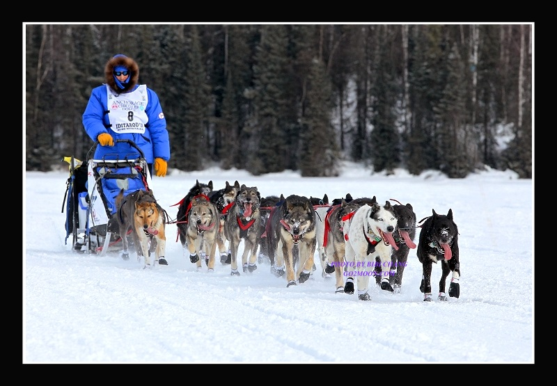 """an overview of the dogsled race iditarod The """"iditarod: race across alaska"""" activity (grades k–8) brings to life the annual 1,100-mile dogsled race across alaska through various online learning activities, students get."""