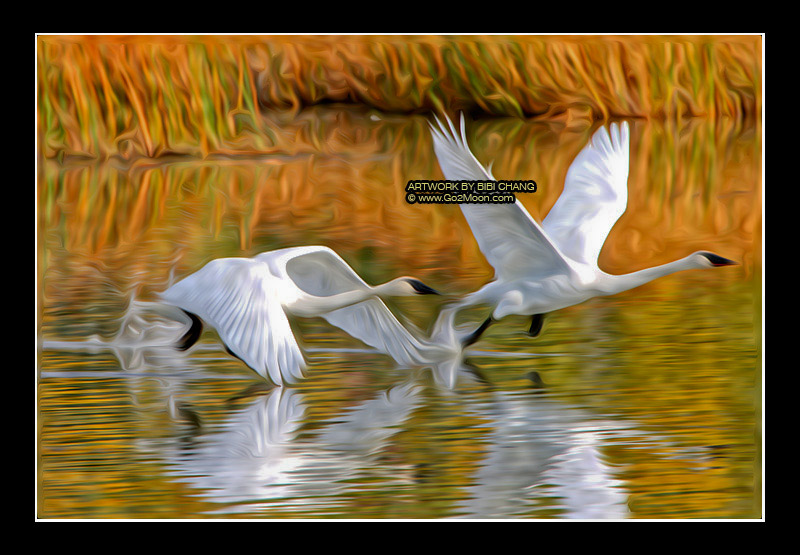 Oil Painting Of Swans I